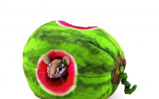 Wassermelone-Handpuppen.jpg